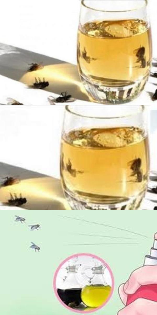 Распылите ЭТО в вашем доме, и вы100% избавитесь от мух, тараканов или комаров ВСЕГО за 2 часа!