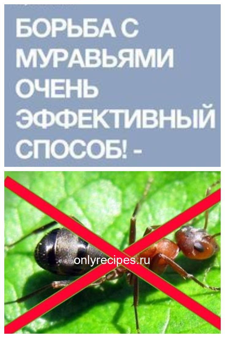 Борьба с муравьями: проверенный способ!