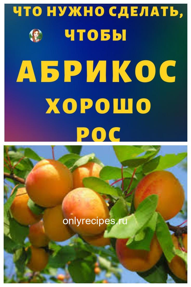 Что необходимо делать чтобы рос абрикос!