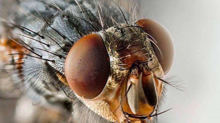 kak-prosto-i-deshevo-zaschitit-svoy-dom-ot-muh-i-komarov-1-4783028