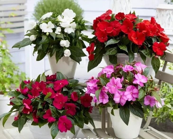komnatnye-cvety-kotorye-budut-radovat-svoim-cveteniem-ne-perestavaya-1-1452392