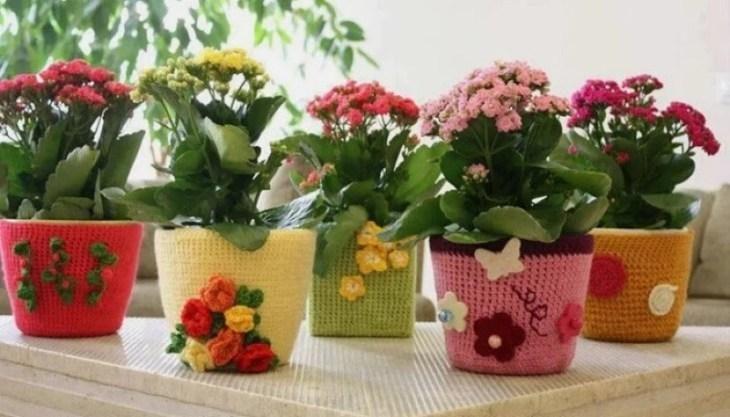 komnatnye-cvety-kotorye-budut-radovat-svoim-cveteniem-ne-perestavaya-2-9140628