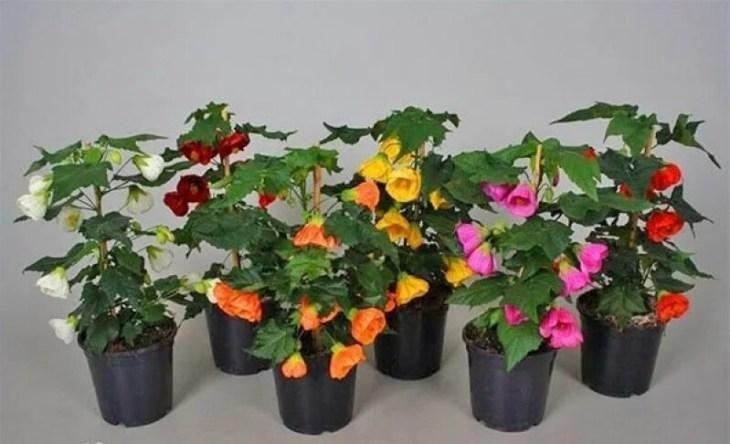 komnatnye-cvety-kotorye-budut-radovat-svoim-cveteniem-ne-perestavaya-6-1694615