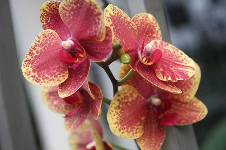 kopeechnoe-udobrenie-dlya-orhidey-vsego-paru-polivov-i-ty-ne-uznaesh-svoi-cvety-4-5019724