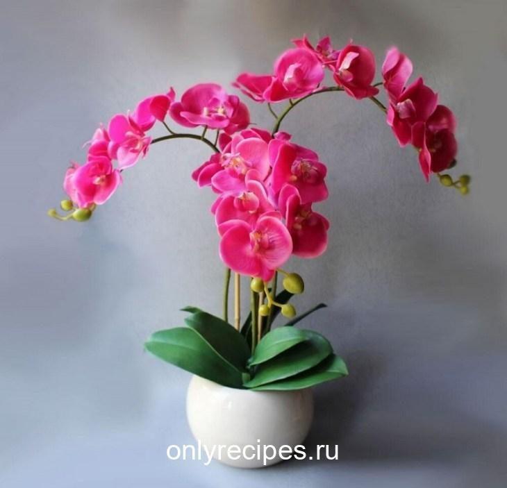 kopeechnoe-udobrenie-dlya-orhidey-vsego-paru-polivov-i-ty-ne-uznaesh-svoi-cvety-6-3210124