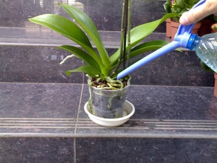 kopeechnoe-udobrenie-dlya-orhidey-vsego-paru-polivov-i-ty-ne-uznaesh-svoi-cvety-7-6491997